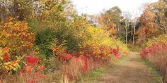 Beautiful fall colors in Cape May's Higbee Beach dune forest.