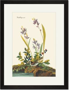 Black Framed/Matted Print 17x23, Field Sparrow Image Title: Field Sparrow. Painter: John James Audubon (1827). High quality print, matted in white and framed in black wood.. Outer frame dimensions 17x23, print size 12x18, plexiglass face.. FREE SHIPPING when you buy 2 or more Framed Prints from ClassicPix..