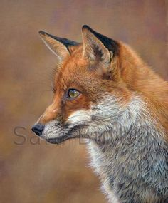 Artist Sara Butt, Wildlife Art Gallery, British to African Wildlife Fox Totem, Fox Pictures, Pet Fox, Fox Pattern, The Jacksons, Fox Art, Magical Creatures, Wildlife Art, Animal Paintings