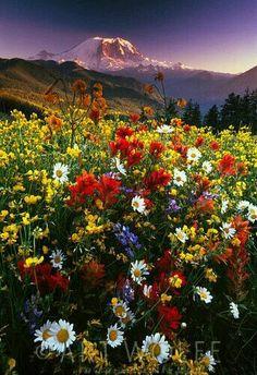 Splendido campo di vari qualita' di fiori