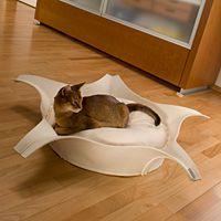 cat-star-bed.jpg (200×200)