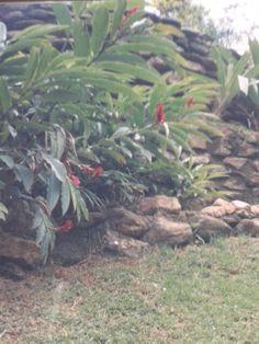 Jardim composto