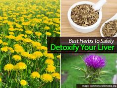 Best Herbs To Safely Detoxify Your Liver