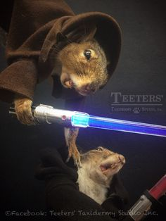 Star Wars squirrels, see more on eBay