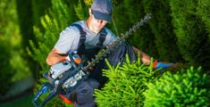 Every landscape owner wants to make their lawn or yard beautiful & organized. For that, hiring professional landscapers is extremely necessary. Experts can create a beautiful landscape by using the right tools and techniques. Tree Loppers, Trees, Ste Julie, Tree Surgeons, Landscaping Tools, Commercial Landscaping, Tree Company, Garden Shrubs, Removal Services