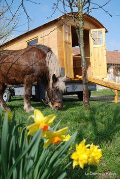 Gypsy caravan and horse