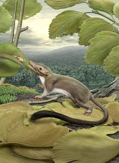 An artist's rendering of the hypothetical placental ancestor, a small, insect-eating animal with a long, furry tail. The research team reconstructed the anatomy of the animal by mapping traits onto the evolutionary tree most strongly supported by the combined phenomic (physical traits you can see) and genomic data and comparing the features in placental mammals with those seen in their closest relatives.