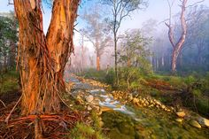 'Mystic Forest' by Mark Gray