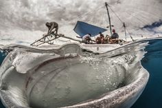 A photographer captured the moment a whale shark appeared to have its mouth open ready to devour a boat full of fishermen, an amazing image that is up for the People's Choice Award in the Wildlife Photographer of the Year contest by the Natural History Museum in London.