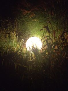 Kugelleuchte / Gräserkombination. Der Lichtschleier schmiegt sich sanft an die filigranen Halme.