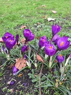 Green park, beautiful purple flowers are welcoming spring
