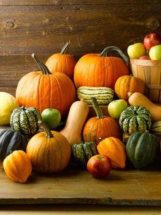 Pumpkins and Squash autumn harvest Harvest Time, Fall Harvest, Bountiful Harvest, Autumn Aesthetic, Fall Pictures, Pumpkin Pictures, Autumn Inspiration, Fall Pumpkins, Fall Season