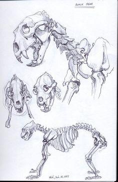 "Skeletal bear sketches. ""Black Bear Skeleton"" by Dragon2524 on Deviant Art."