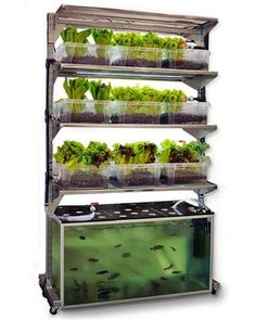DIY IKEA Shelf In-Home Aquaponics