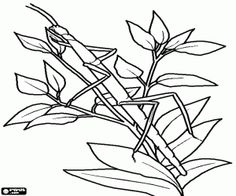A stick insect or walking sticks coloring page Snake Coloring Pages, Insect Coloring Pages, Pattern Coloring Pages, Online Coloring Pages, Coloring Pages For Kids, Coloring Books, Printable Animals, Printable Activities For Kids, Insects For Kids