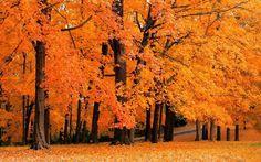 Naturaleza, fotos, otoño, otoño, los árboles, amarillo, bosque, parques, hojas wallpaper