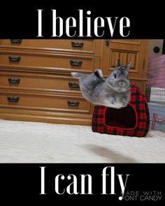 Fly fly away cutie pie. Cute Animal Memes, Funny Animal Quotes, Animal Jokes, Cute Animal Pictures, Cute Funny Animals, Cute Baby Animals, Funny Rabbit, Pet Rabbit, Cute Baby Bunnies