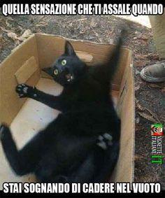 Foto Immagini Animali Divertenti Pazzi Che Fanno Ridere Tanto