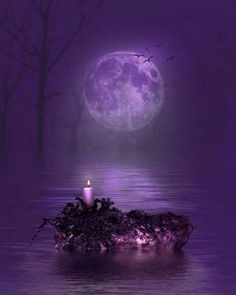 Mysterious moonlight in beautiful purple Purple Love, Purple Lilac, All Things Purple, Shades Of Purple, Deep Purple, Purple Stuff, Purple Art, Purple Flowers, Beautiful Moon