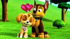 65 Best pet images | Cute dogs, Gatos, Pets