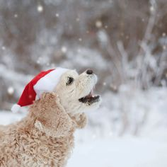 Christmas carroling - Photography by Toast Photos
