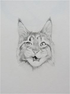 CATS! so expressive, you wonder if they actually have personalities! This pencil drawing of a cat is just one way I love to have a little fun in my sketchbook!   #drawing #catdrawing #drawing #catportrait #feline #petportrait #portraitdrawing #cute #animaldrawing #animals #pets
