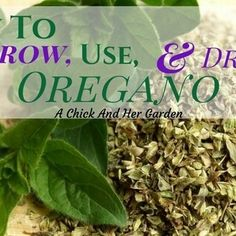 Learn how to grow oregano, as well as how to dry and store it and all of the health benefits oregano has to offer!