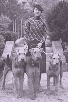 Molosser Dogs Gallery - Airedale Terrier/Airedale Terrier