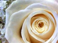 Rose in Simply Rose, Apple Press