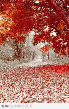 Winter and Fall Meet Each Other by Astrid V.