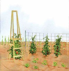 """Gardening Tomatoes Mother Earth news """"Best Homemade Tomato Cages"""" Tomato Trellis and Wooden Cage - Who needs store-bought tomato cages? You can build your own sturdy, low-cost tomato cages and trellises with these four terrific designs. Tomato Trellis, Tomato Cages, Garden Trellis, Diy Trellis, Unique Gardens, Amazing Gardens, Trellis Design, Garden Structures, Edible Garden"""