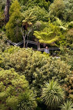 Bush city - recreated natural world at Te Papa, Wellington, NZ