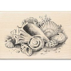 Rubber stamp is perfect for sprucing up scrapbooks, card and other paper craftsScrapbooking tool features a 'Seashells Still Life' designStamping reaches new heights with a fun wood-mounted stamp