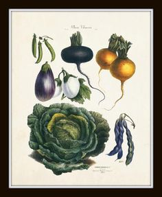 FRENCH VEGETABLE PRINT SET PRINT SET NO. 8 This print set features 4 vintage French Vegetable illustrations which have been digitally enhanced and added to an a