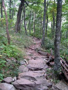 Appalachian Trail (Springer Mountain) Starting to plan our next section. If interested in hiking with us, let us know.