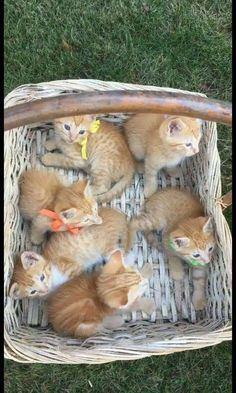 Tabby Kitten So sweet and beautiful - Cute funny cat kitten pictures videos Kittens And Puppies, Cute Cats And Kittens, I Love Cats, Crazy Cats, Kittens Cutest, Tabby Kittens, Orange Tabby Cats, Ginger Cats, Beautiful Cats