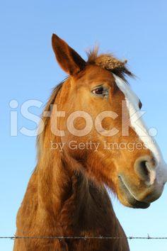 Horse's perspective – fotografía de stock libre de derechos