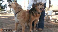 Meet the Marijuana Industry's Newest Customers: Dogs