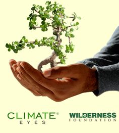 Minimise our carbon footprint, plant a spekboom and help save our earth. Triple Bottom Line, Carbon Neutral, Save Our Earth, Year 7, Households, Carbon Footprint, What You Can Do, Cape Town, Planting