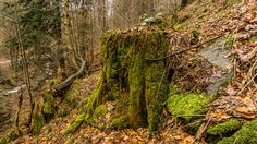 Beskid Sądecki forest in Poland