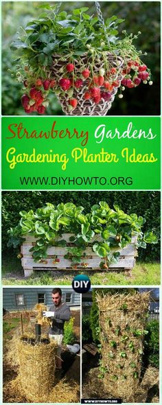 Space saving Strawberry Garden Gardening Planter Ideas and Instructions