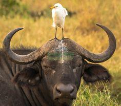 Comedy Wildlife Photo Store: 2016 &emdash;