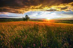 *flower power*, автор — Ralf Thomas на 500px.com