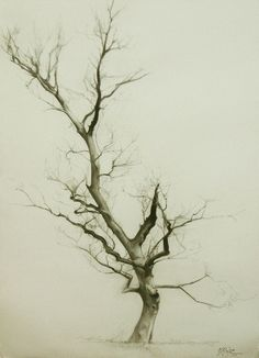 Branches by Miguel Angel Oyarbide, via Behance Lovely of a tree. Miguel Angel, Landscape Drawings, Landscape Art, Realistic Drawings, Art Drawings, Pencil Drawings, Tree Sketches, Desenho Tattoo, Tree Forest