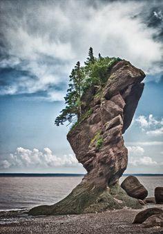Hopewell Rocks, New Brunswick, Canada Beautiful Rocks, Beautiful World, Beautiful Places, Landscape Photography, Nature Photography, Weird Trees, Rock Sculpture, Rock Formations, Natural Phenomena