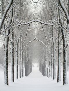 A Magical White Christmas