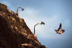 Socotra Island | Atlas Obscura