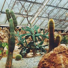 The Cacti House #paigntonzoo #greenhouse