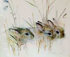 Rabbit Watercolor Harekelinger Danish Artist by FreewheelFinds: