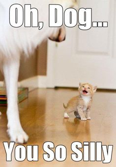 Oh, Dog - You so silly!